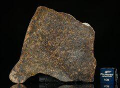 NWA 13696 (16.73 gram)