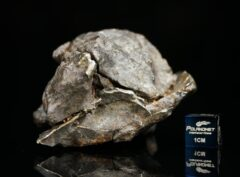 NWA 13696 (176.5 gram)