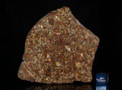 NWA 7814 (48.85 gram)