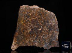NWA 13696 (74.28 gram)