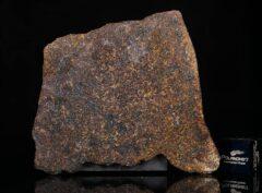NWA 13696 (12.92 gram)