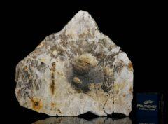 MC 194 (12.56 gram)
