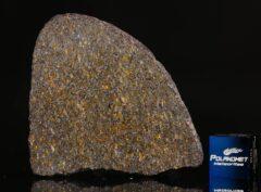 NWA 11641 (11.56 gram)