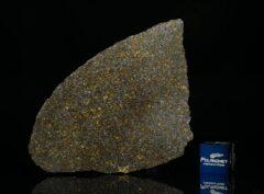 NWA 11641 (14.56 gram)
