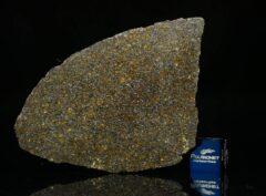 NWA 11641 (16.57 gram)