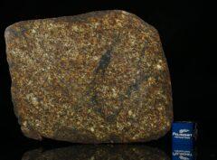 NWA 13876 (50.94 gram)
