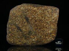 NWA 13876 (49.15 gram)