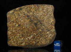 NWA 13876 (46.00 gram)