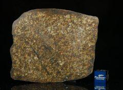 NWA 13876 (47.00 gram)