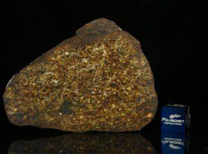 NWA 13876 (27.40 gram)