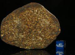 NWA 13876 (33.00 gram)