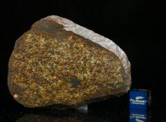 NWA 13876 (32.80 gram)