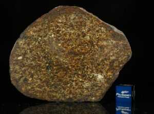 NWA 13876 (38.90 gram)