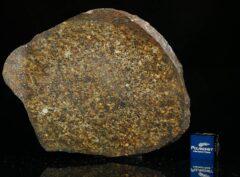 NWA 13876 (41.50 gram)