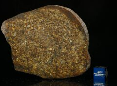 NWA 13876 (48.60 gram)