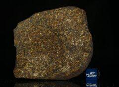 NWA 13876 (42.10 gram)
