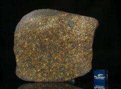 NWA 13876 (43.80 gram)