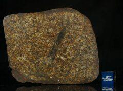 NWA 13876 (51.40 gram)