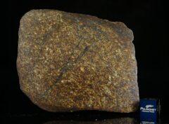NWA 13876 (199 gram) Main Mass