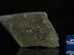 NWA 8221 (8.78 gram)