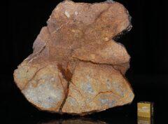 Al Haggounia 001 (78.50 gram)