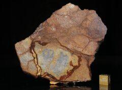 Al Haggounia 001 (77.80 gram)