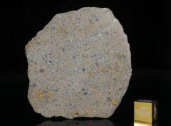 NWA 14149 (19.66 gram)