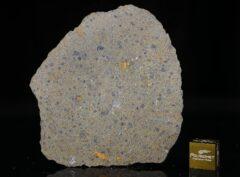 NWA 14149 (19.91 gram)