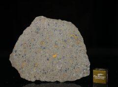 NWA 14149 (21.14 gram)