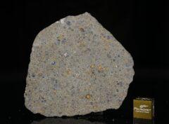 NWA 14149 (22.03 gram)